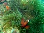 Underwater-Thousand Islands